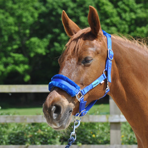 ROYAL BLUE DELUXE HEADCOLLAR WITH LEADROPE