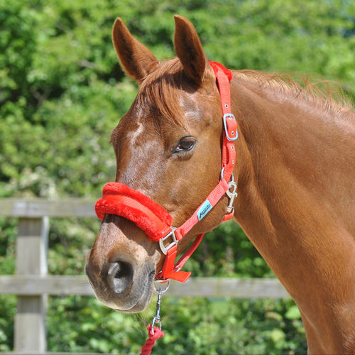 RED DELUXE HEADCOLLAR WITH LEADROPE