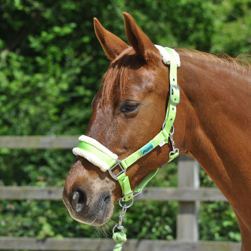 LIME DELUXE HEADCOLLAR WITH LEADROPE