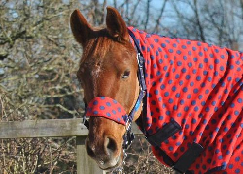 DELUXE FLEECE HEADCOLLAR WITH LEADROPE - RED WITH NAVY SPOT